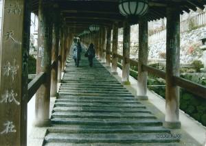 8番 長谷寺 登廊