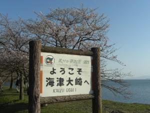 海津大崎の看板