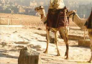 ラクダに乗ると20ポンド