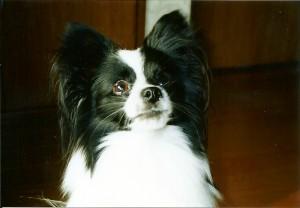 2001年9月 二男ラッキー1歳 今はお年寄り