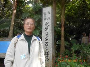 石垣島の観光 ヤエヤマヤシは、一属一種の珍しいヤシで、国指定天然記念物