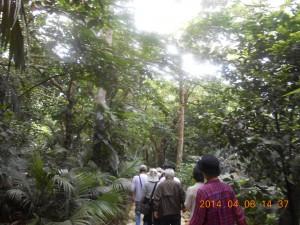 石垣島の観光 ヤシの林