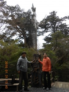 紀元杉(バスを降りて目の前!樹齢3000年を超えるといわれる巨大な屋久杉)-